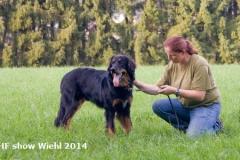Fotos Wiehl 2014 IHF Show