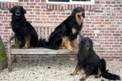 Drie generaties Gwynneath Guusje en Thor